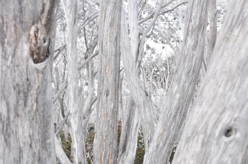 Winter hues 6