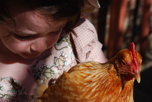 chook cuddle 8