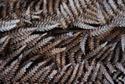 Tree fern skirt