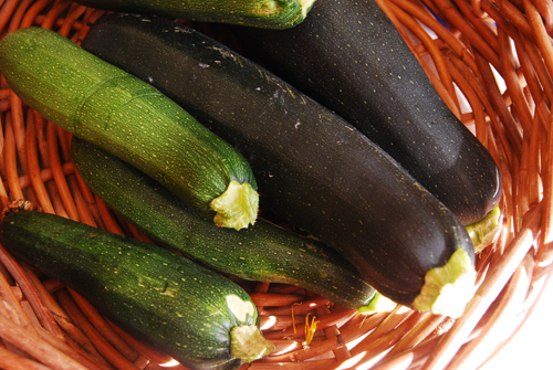 zucchini glut
