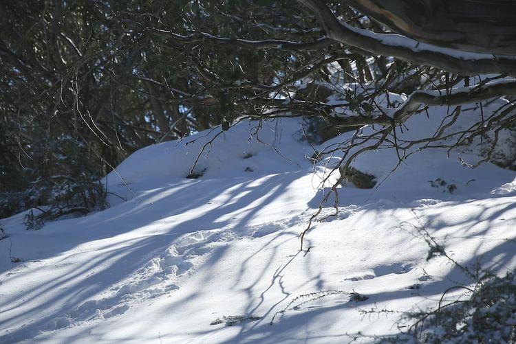 Snow day 21