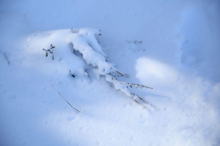 Snow day 24
