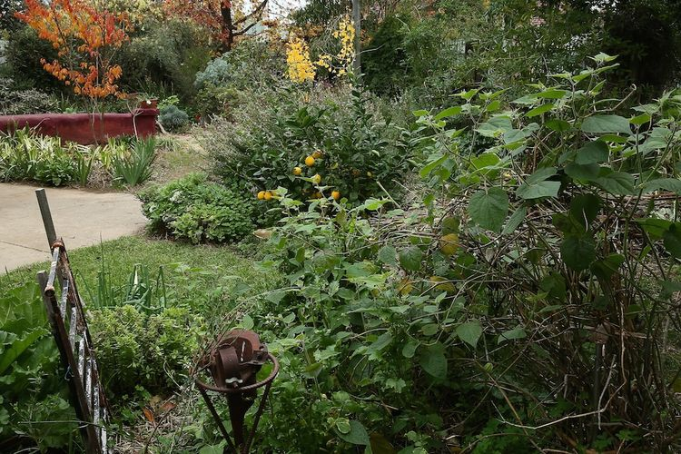 Secret garden 12