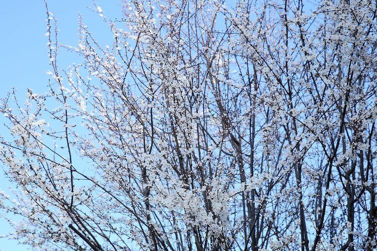 Spring begins 1